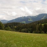 Bergwiese am Wilden Kaiser