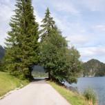 Naturtor - Natürliches Tor aus Bäumen