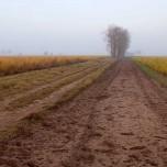 Spargelfeld im Herbst