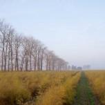 Gelbes Spargelfeld im Herbst