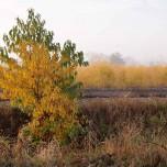 Herbststimmung bei Busendorf