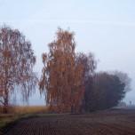 Herbststimmung am Spargelfeld