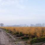 Spargel im Herbst bei Klaistow
