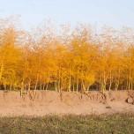 Spargel im Herbst
