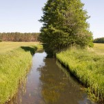 Der Fluß Nieplitz