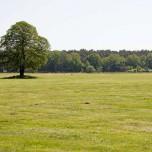 Solitär stehender Baum nahe der Nieplitz
