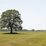 Einzeln stehender Baum nahe der Nieplitz