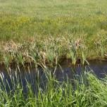Meliorationsgraben