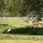 Storch und Mähdrescher am Radweg F5