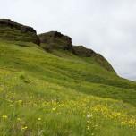 Blühende Wiese bei Vik i Myrdal