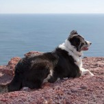 Zeitweiliger Begleiter - ein Hund