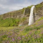 Seljalandsfoss - Wasserfall auf Island II