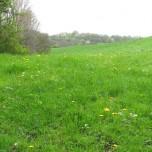 Frühlingswiese 2