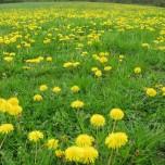 Wiese in grün-gelb