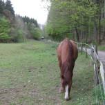kleine Pferdekoppel