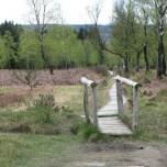 Brücke im Moor
