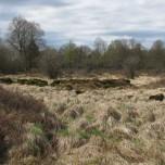 Moorgebiet 2