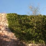 Naturwunder Birke