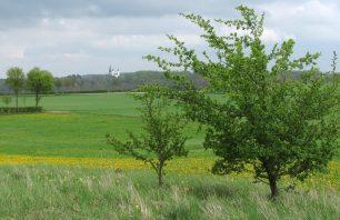 Blick nach Kloster Steinfeld