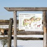 Über Przewalski-Pferde