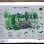 Über den Lebensraum Heide