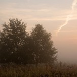 Nebel bei Glindow I