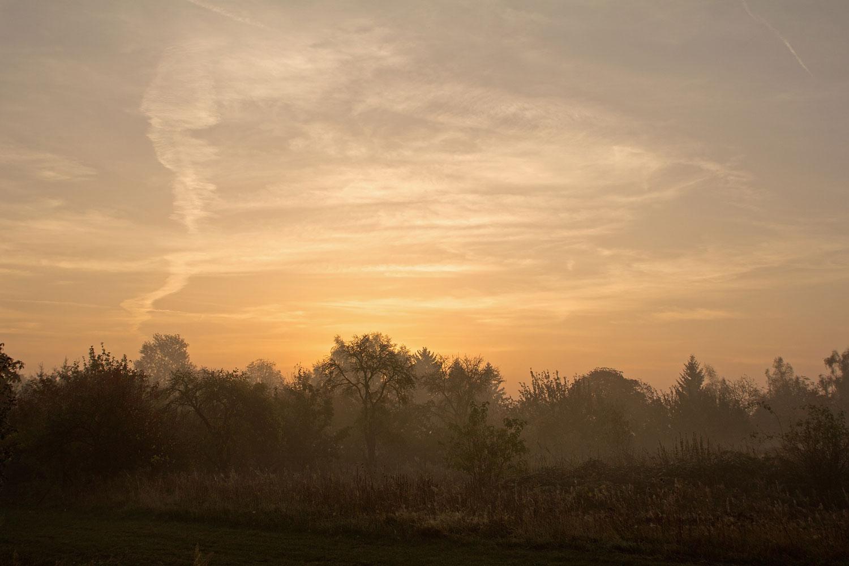 Nebel bei Glindow IV