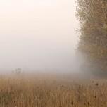 Nebel bei Glindow V