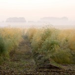 Nebel bei Glindow VI