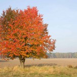 Flammender Baum