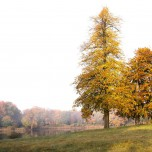 Zwei bunte Bäume