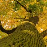 Baumkrone im Park Petzow II