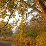 Ufer des Haussees I
