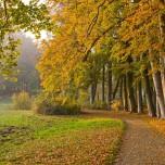 Parkweg im Park Petzow I