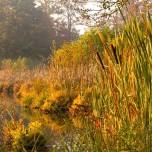 Ufer des Haussees II