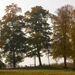 Ufer des Schwielowsees