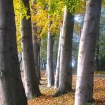 Stämme im Park Petzow I