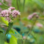 Schwebende Blüte