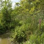 Ufer des Rietzer Sees