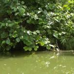 Kanalufer VI