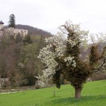 Burg Birseck V
