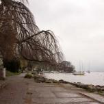 Ufer des Zürichsees I