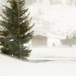 Winterlandschaft vom Glacier Express aus III