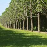 Allee nach Belvedere, Sanssouci