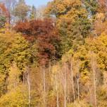 Herbstwald, Ausschnitt