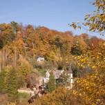 Herbstwald in Wehlen