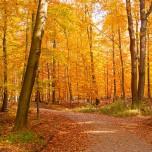 Herbstlicher Wanderweg I