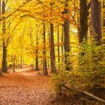 Herbstlicher Wanderweg II