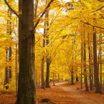 Herbstlicher Wanderweg III