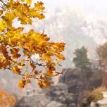 Herbstliche Buche, Detail V